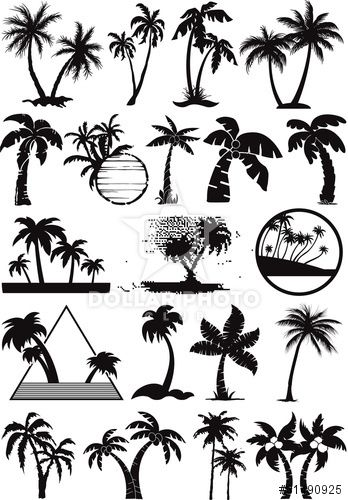 palm  and coconut trees vector silhouette                                                                                                                                                     More