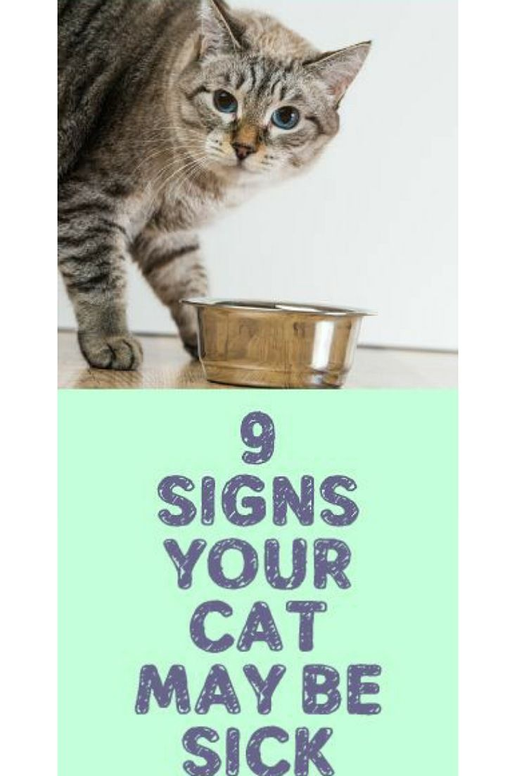 Signs Your Cat May Be Sick Sick Cat Cat Care Cat Health Problems