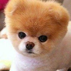 The Cutest Animals On Instagram