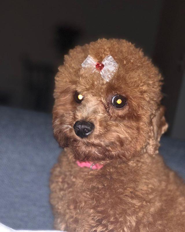 I Heard Its National Day Everyone Meet Mocha Puppy Puppies
