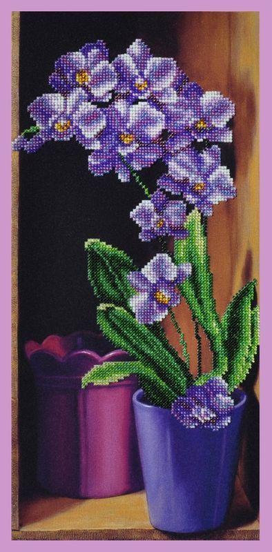 Орхидея P-235