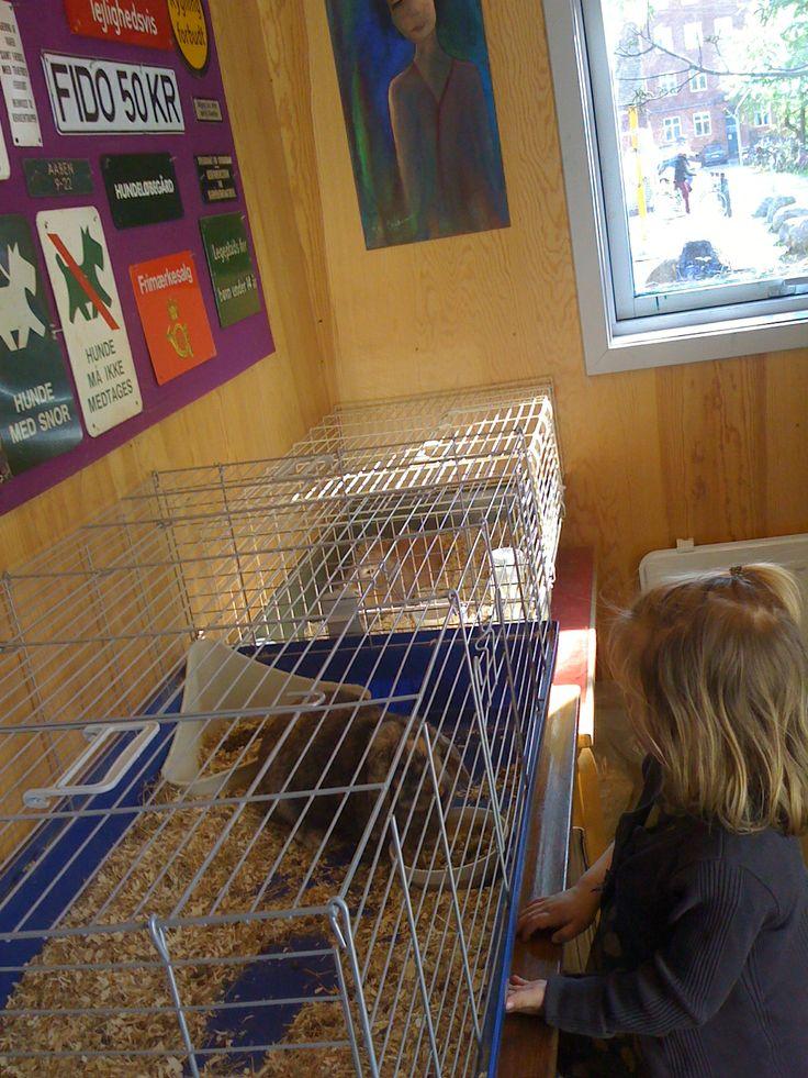 Den bemandede legeplads ved Hans Tausen Øst har indendørs lokaler med kaniner, som man kan hilse på.