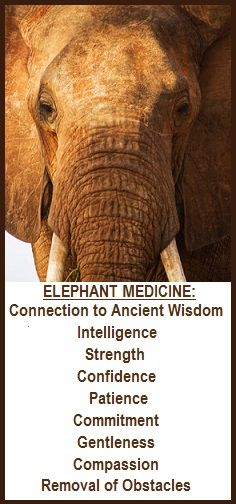 animal spirit guide elephant balancedwomens.blog.com.