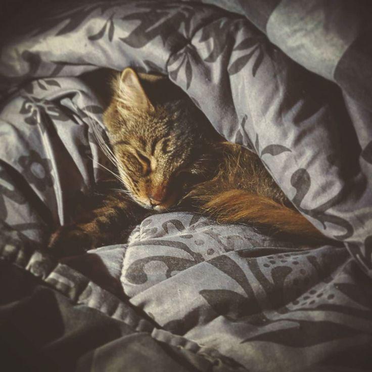 So. I found this hogging my duet.  #cat #winterblanket #hiding #sleeping