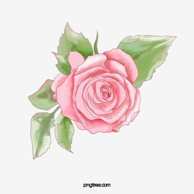 Rozowe Roze Roza Clipart Clipartow Kwiat Kwiaty Png I Plik Psd Do Pobrania Za Darmo Rose Clipart Flower Clipart Watercolor Flower Background