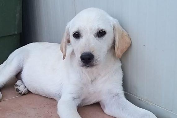 Pet Projects Bild Von M Hari Hunde Herdenschutzhund