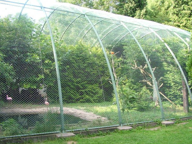 13 best peacock cage images on pinterest for Garden prairie pool enclosures
