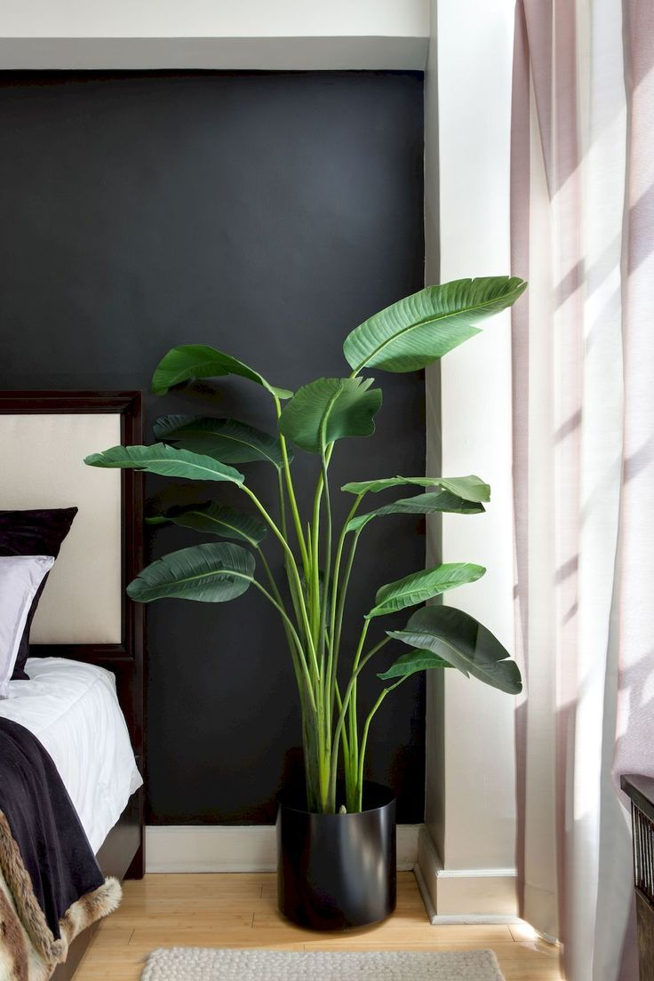 Apartment interior gardening with tropical houseplants