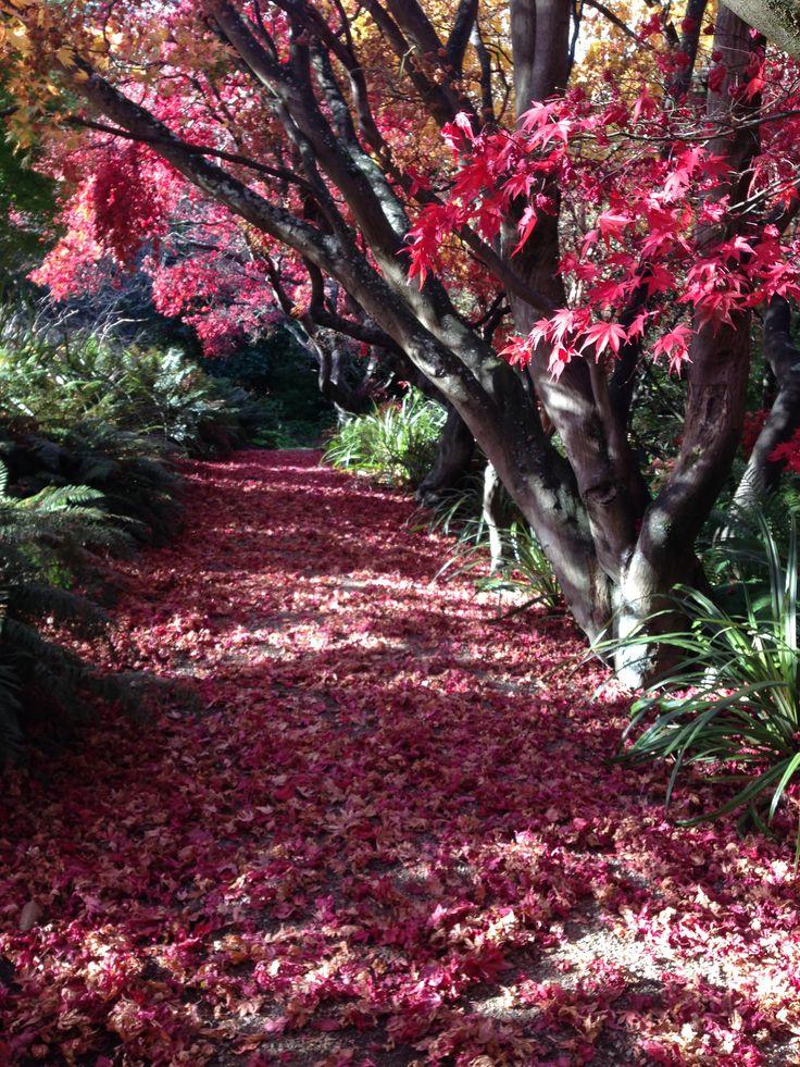 Autumn in the Botanical Gardens, Dunedin NZ