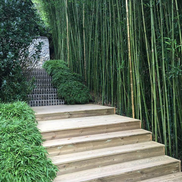 "441 gilla-markeringar, 5 kommentarer - @jardinsurlaseine på Instagram: ""Another facet of the Etretat Gardens in Normandy, France 💚 A bamboo room 💚 @les_jardins_d_etretat…"""