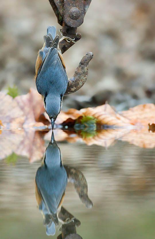 blue bird #spring