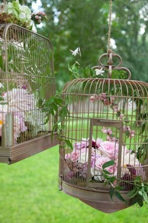 Bird Cage by kathryn