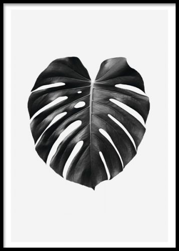 Black monstera, poster. plakater med planter og blader. www.desenio.dk