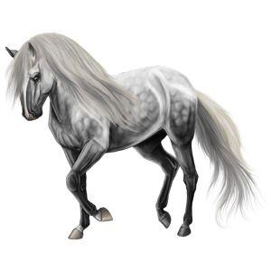 gяєу ѕтσям вєαυту, Riding Horse Marwari Cherry - Howrse