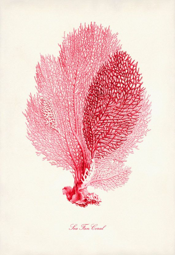 """Shabby Chic Sea Fan Coral 13"""" x 19"""" Art Print Poster From Early 1900s Scientific Illustration"""