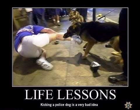 Hahaha!! Kicking a dog in general is a bad idea, but a police dog.... yeah, he'll show you.