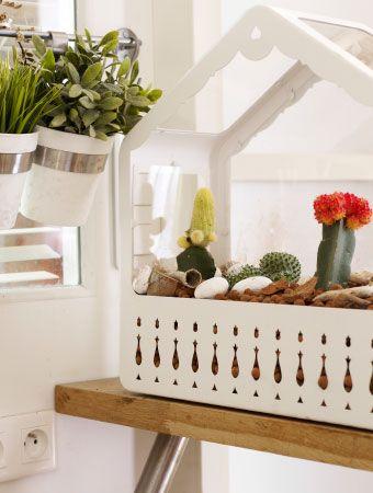 Kakteen sind ideal für einen pflegeleichten Minigarten in einem IKEA PS Gewächshaus.