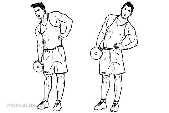 Standing Dumbbell / Kettlebell Side Bends