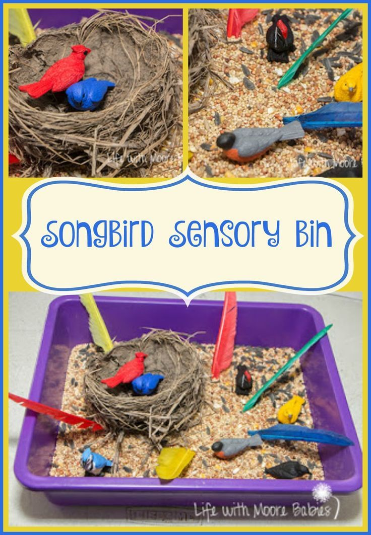 323 Best Images About Bird Theme Activities For Kids On