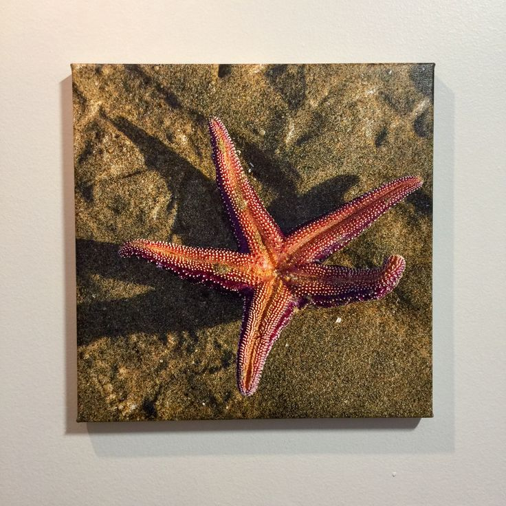 Starfish photo captured in Tofino, BC. Printed on 3/4 thin bar canvas at ABC Fine ART. Square format 16x16 inch only $97. You can print your own artistic photos. #PhotoOnCanvas #CanvasPrint #PrintOnCanvas #PictureOnCanvas #ArchivalPrints #BurnabyPhotoOnCanvas #VancouverPhotoOnCanvas #AbcFineArt