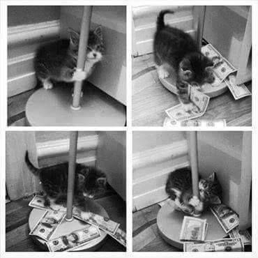 By Gato cientifico