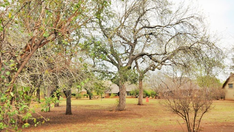 Satara is the third largest Rest Camp in the centre of Kruger Park.