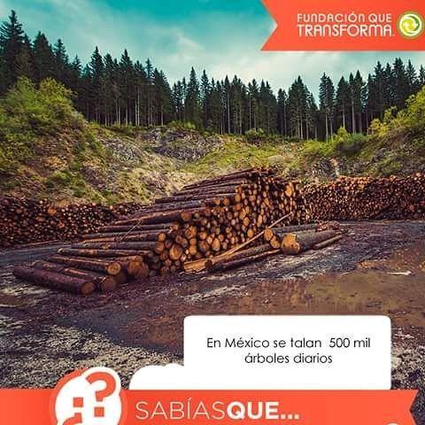#SabíasQue Según la Profeco en México se talan más de 500 mil árboles anualmente. Esto se podría evitar utilizando materiales reciclados o tecnologías amigables con el medio ambiente.  #ÚneteAlCambio