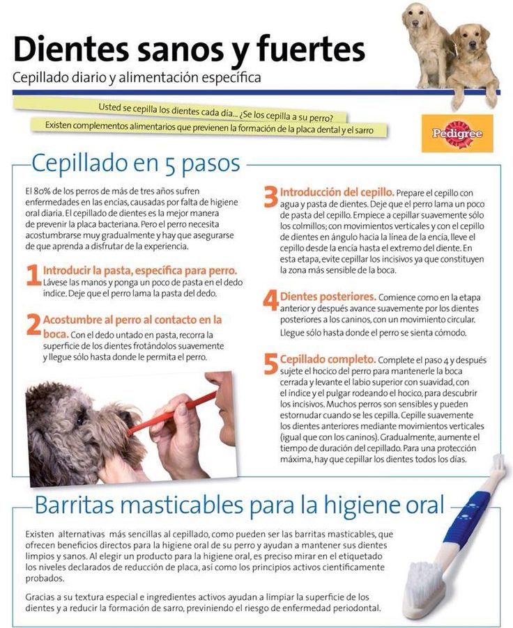 Clinica Veterinaria Estoril - Móstoles  Avenida CONSTITUCION, 74  Tfno: 916466625  Abierto 24 Horas  http://www.cvestoril.com/