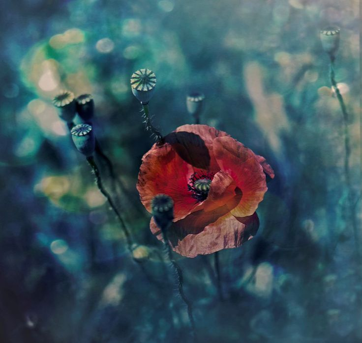 © Agnieszka Mlicka 2015This artwork come from my IV creativity era - MODERATION…