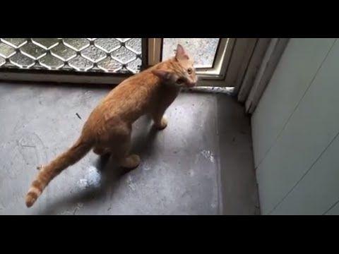 Cute Kitten Meowing Video - Cute Kitten of The Day
