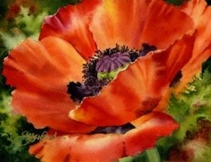 Gorgeous Poppy plants are very easy to grow. They prefer full sun to partial shade. They will grow well in many types of soils and tolerate dry spells well.