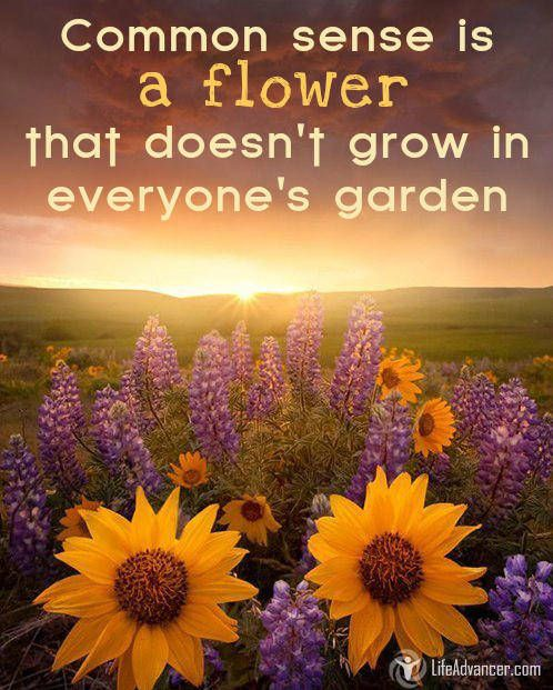 Common Sense is a Flower That Doesnt Grow In Everyones Garden via @lifeadvancer | http://ift.tt/1OwBiCk