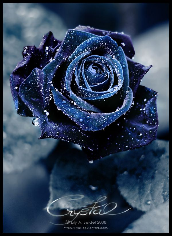 Crystal by Lilyas - beautiful dark blue rose decorated with drops of water