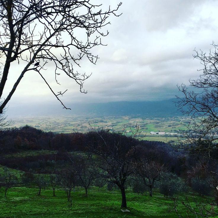 Afternoon lights....  #postcardsofitaly #browsingitaly  #villacampestri #oliveoilresort #takemethere #stayandwonder #nature