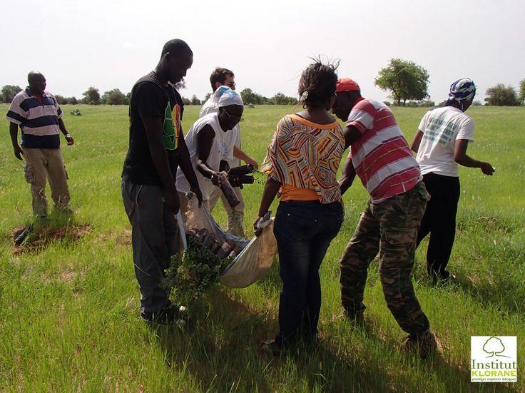 "Institut Klorane   -------    www.institut-klorane.org Périple Sénégal - Projet reforestation ""Grande Muraille Verte"""