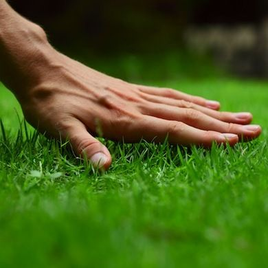 5 Common Lawn Care Problems—And How to Fix Them