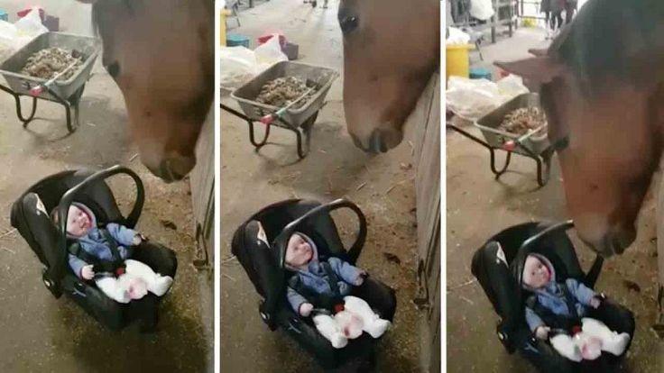 https://ololo.tv/wp-content/uploads/2017/06/6.jpg Эта лошадь знает, как успокоить плачущего ребенка. Видео - https://ololo.tv/2017/06/eta-loshad-znaet-kak-uspokoit-plachushhego-rebenka-video/