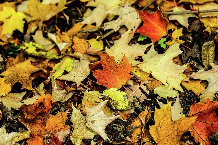 Olga Olay Photograph - Autumn Carpet by Olga Olay #OlgaOlayFineArtPhotography #ArtForHome #FineArtPrints #Fall #Homedecor