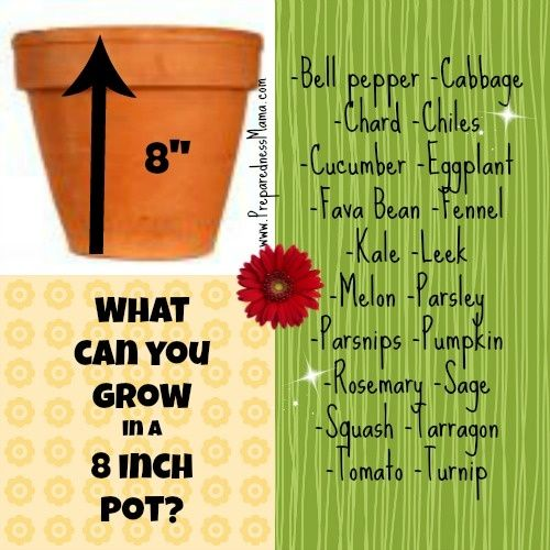 Ideas for what to grow in an 8 inch pot