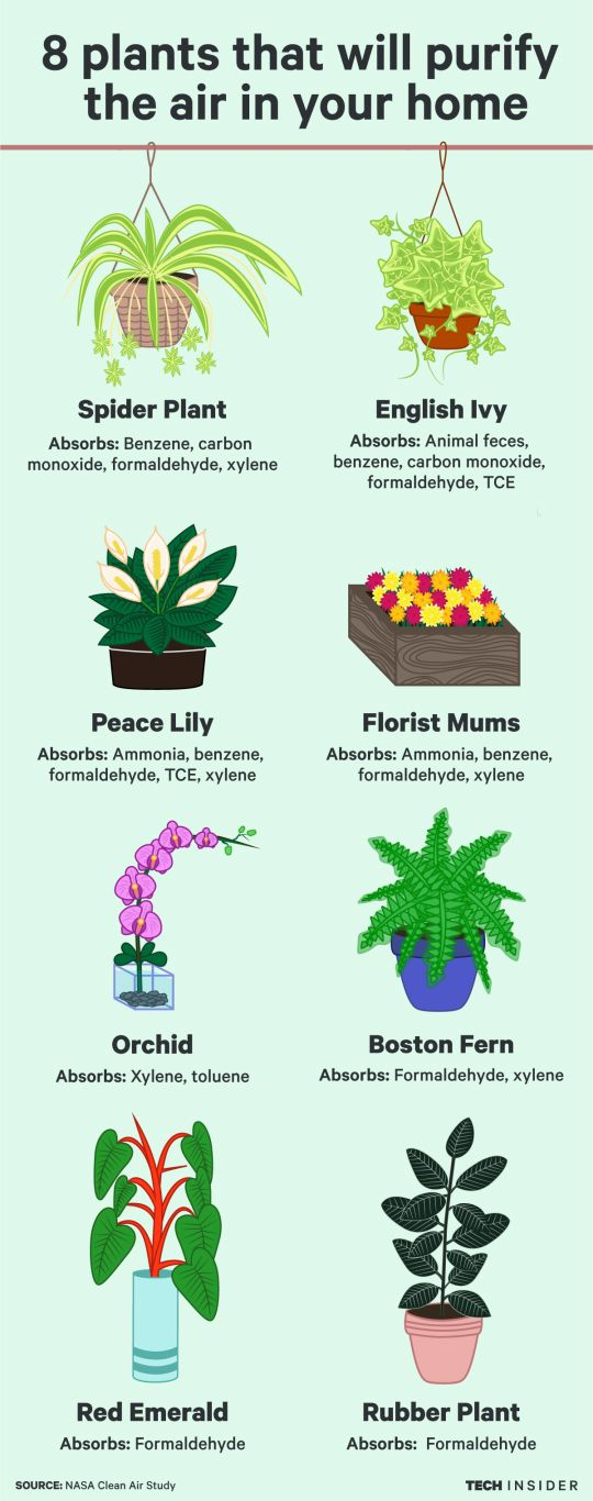 8 plants that will purify the air in your home