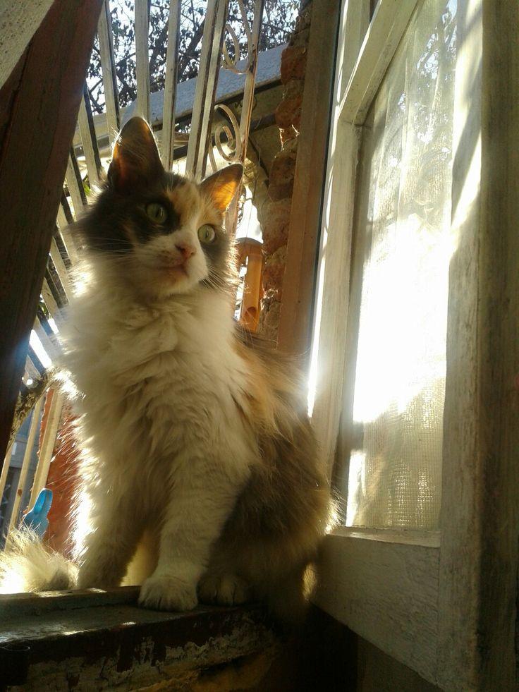 My kedi