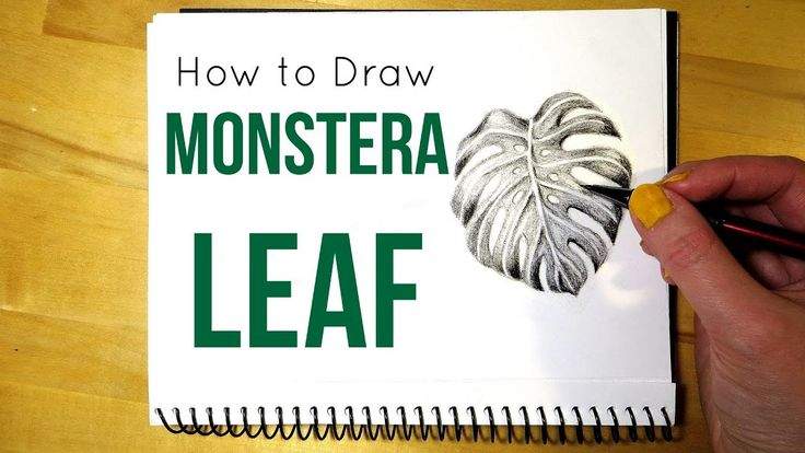 How to Draw a Monstera Leaf || Leaf Drawing in Pencil