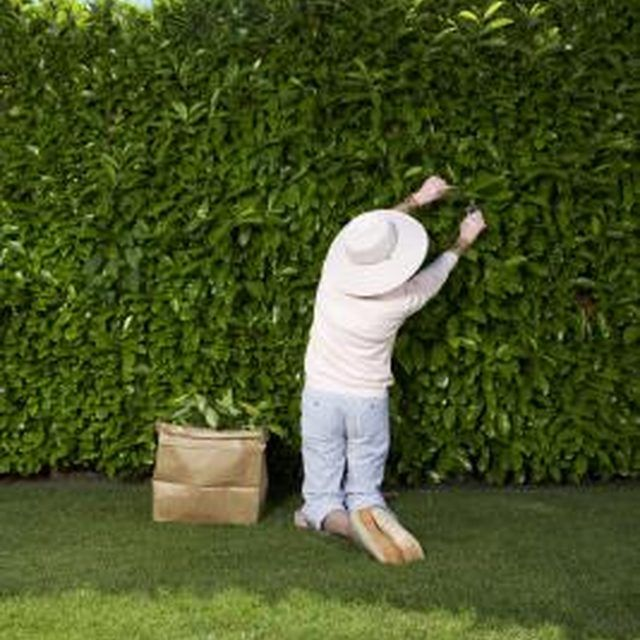 Best 25+ Hedges ideas on Pinterest | Hedges landscaping ...