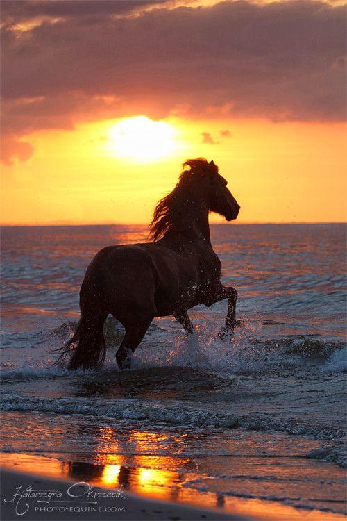 galloping through the beach