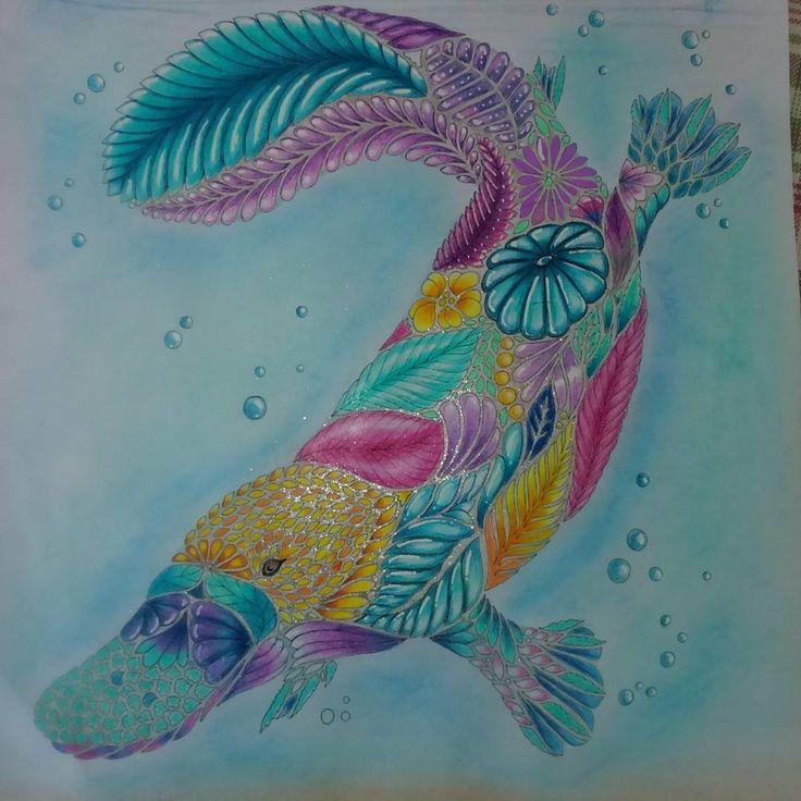 Millie Marotta Curious Creatures Adult Coloring MillieMarotta Curiouscreatures