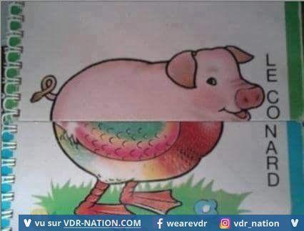 #canard#cochon#drole#syllabozoo
