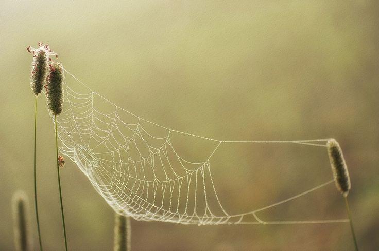 Herbst, Gras, Natur, Spinnennetz, Textur, Tropfen