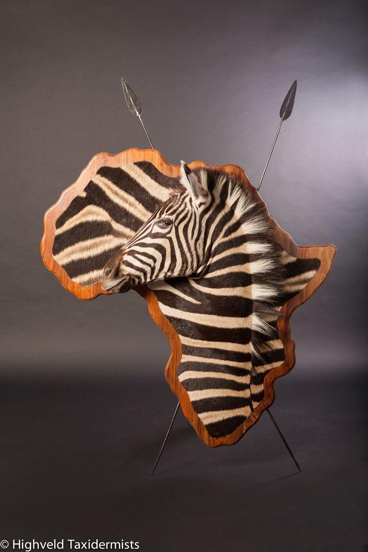 345 best taxidermy images on pinterest bull skulls deer for African skin decoration