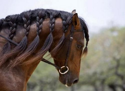 horse hair designs | Posted by dreamgirl1 about a day ago