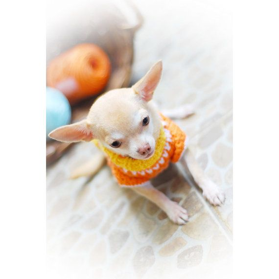 Lindo perro ropa única Crochet ropa para mascotas por myknitt